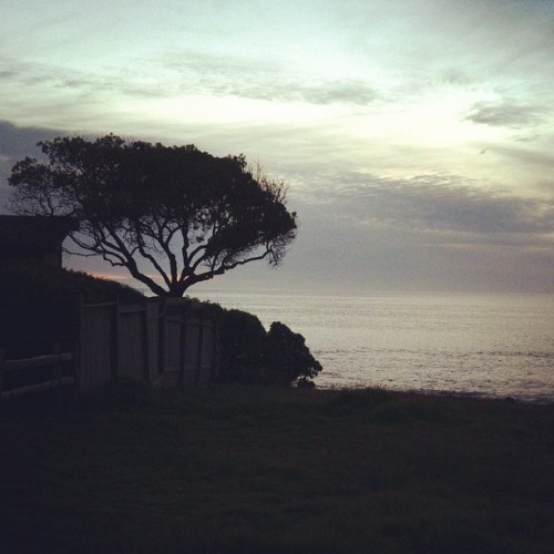 Cambria (Taken with instagram)