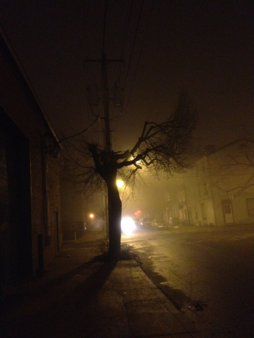 Kensington fog tree.