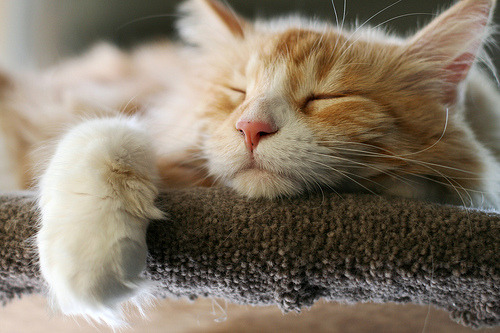 muthafuckincats:  Sweet Dreams (by Jaime Carter)