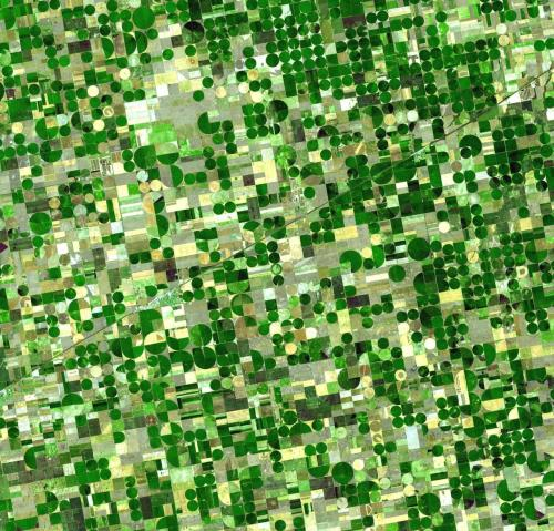 kansas crop fields
