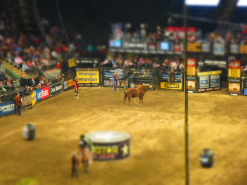 Professional Bull Riding at Madison Square Garden. 01.08.2012