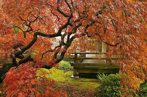 woodendreams:  (by David Gn Photography)  Portland Japanese Garden, Portland, Oregon, US.