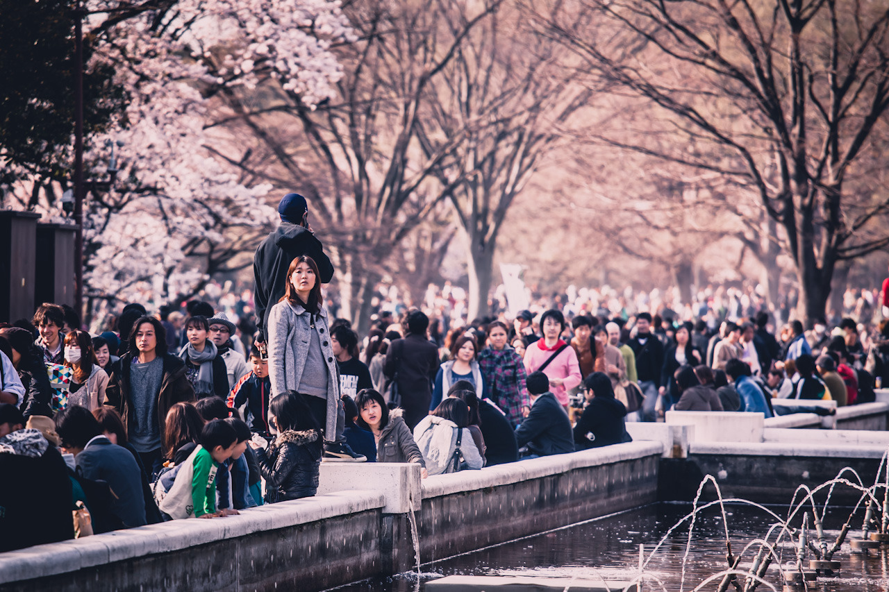 Hanami in Yoyogi Park on Flickr. Via Flickr: When the cherry trees start blooming in spring throngs of people hit the parks. Here is Yoyogi park when Sakura hit on a weekend in early april 2010.