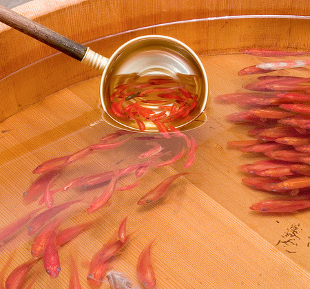 (via Amazing 3D Fish Paintings)  by riusuke fukahori  see more detailed pics on the topmost link to toxel.com…