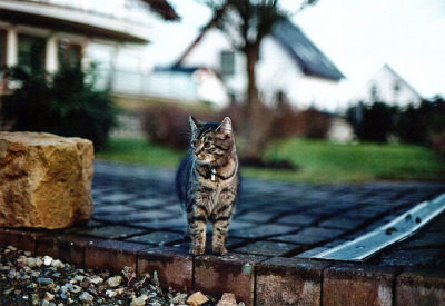 Princess Mira in the garden. Canon AE-1