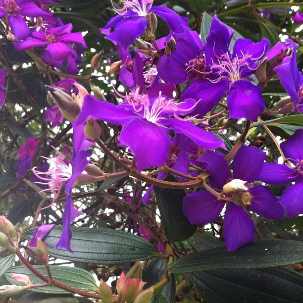#flores #roxo #flowers #purple #verde #green (Taken with instagram)