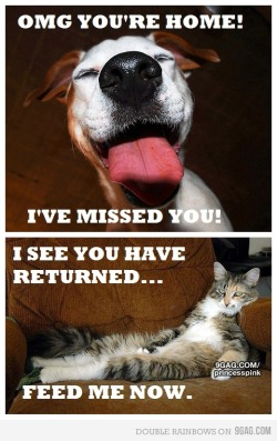 Seee this is why im a dog person 9gag:  (via 9GAG - The difference between cats and dogs)