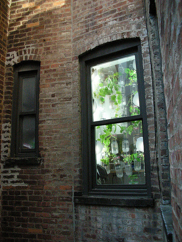darkearthchild:  A new movement of green thumbs, The Windowfarm Project, established in 2009. An open source community developing edible gardens in an urban environment, all year round. It's R&D-I-Y, Research & Develop It Yourself. You don't need space and a yard to to grow your own food. This is something we all can do! Website: our.windowfarms.org Video: Here