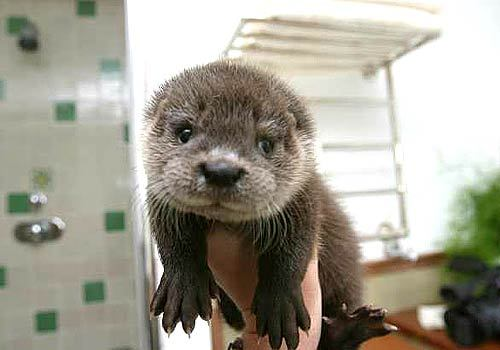 Seriously bro? You otter move on. There are plenty more semi-aquatic mammals in the sea.