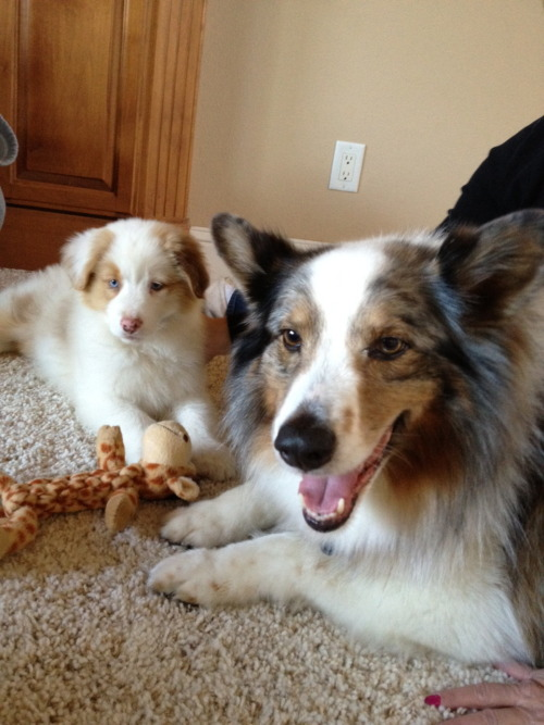 Indy and his new friend Coco :) aren't they adorable?
