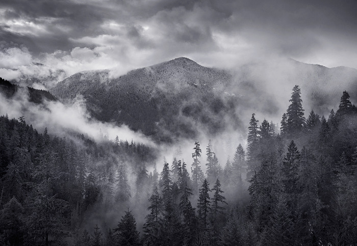 formfollowsfunctionjournal:  Oregon Mist