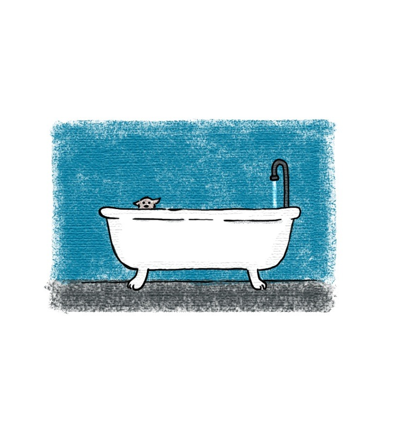 Bath time  © Liz Climo 2007