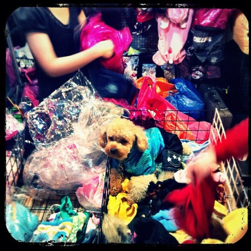 Working or for sale? #t4taiwan #taiwan #nightmarket #cutedog / on Instagram http://instagr.am/p/hpW0x/