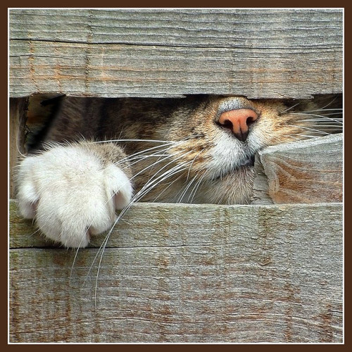 Please Let Me In!! by adrians_art on Flickr.There is not point in hiding yourself, this morning. If you are not ready for a new day, the new day is ready for you.