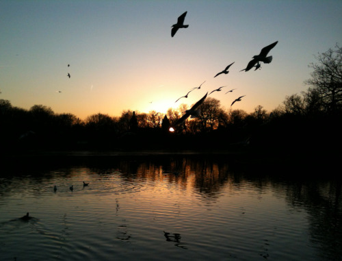 Taken with iPhone 3GS at Hollow Pond nr Walthamstow 14th Jan 2012