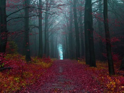 nationalgeographicdaily:  Autumn Woods, GermanyPhoto: Jonathan Manshack This photo was taken during autumn in Hameln, Germany, which is the birthplace of the infamous Rattenfanger - or Pied Piper as we Americans know it. This shot is actually on top of the last few hills that soon sink into the state of Niedersachsen (Lower Saxony). This area is essentially lowland plains - hence the name Lower Saxony!