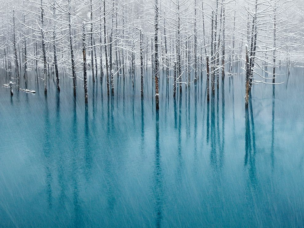 "Blue Pond, HokkaidoPhoto: Kent Shiraishi The ""blue pond"" of the famous tourist resort in Biei, Hokkaido, Japan is a place where many tourists gather in spring, summer, and autumn. However, since this pond freezes in winter, nobody is there during that period. This photograph was taken during the first snow of the season as it fell over the blue pond."