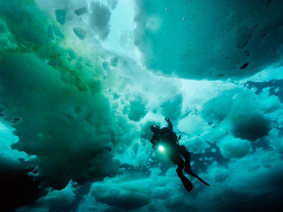 Ice Canopy, JapanPhoto: Brian Skerry A diver explores an ice canopy off Hokkaido, Japan. The frozen seas here are a harsh realm to explore, but they're anything but bleak, sustaining a variety of life above and below.