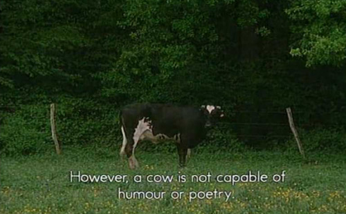 the-absolute-funniest-posts:  territorialcreep: those dumb idiot cows   This post has been featured on a 1000notes.com blog.  I beg to differ