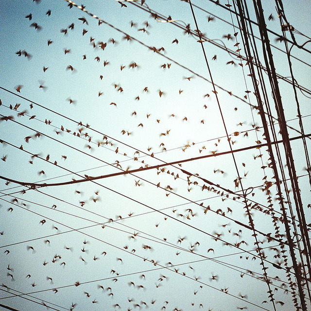 inspiredesire:  birds by toshi* on Flickr.