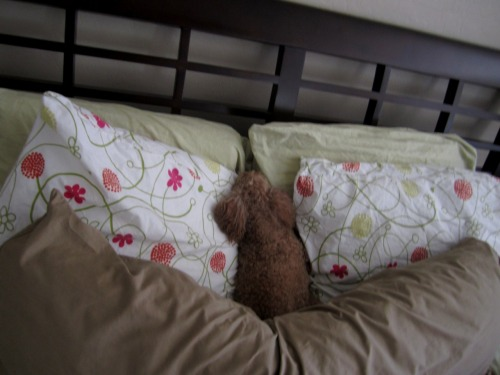 leilaani:  I sleep on the right side of my bed. This dog, on the on the other hand .. lol  She was always such an odd dog.