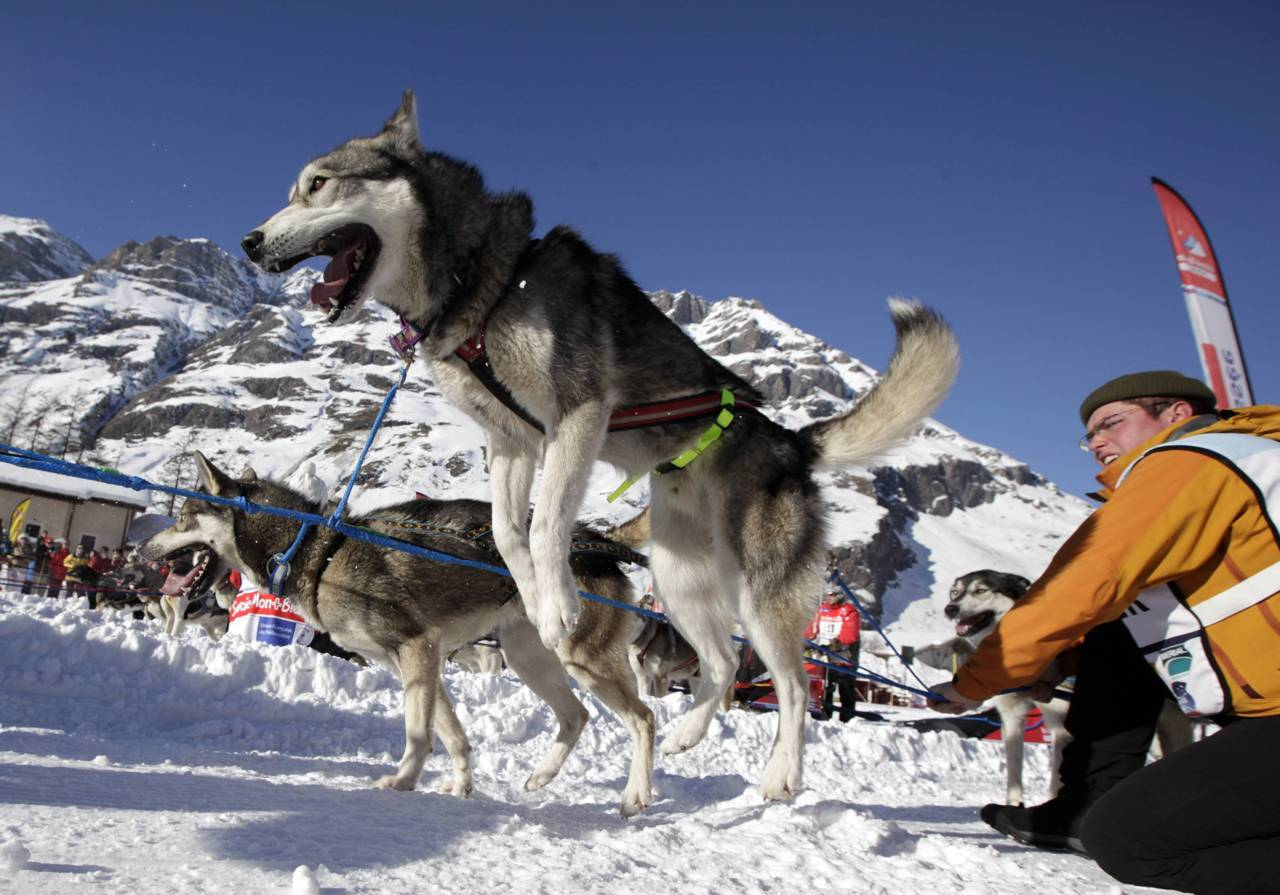 nationalpostsports:  A dog jumps before the mass start of the eighth stage of the La Grande Odyssee sled dogs race in Bessans January 16, 2012. The race crosses the Alps in France covering over 1000 km (621 miles) over 11 days. Photo:  REUTERS/Denis Balibouse