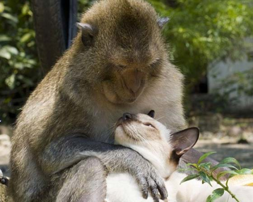 LOVE transcends all boundaries and differences!  (To See more of this inter-species love affair, click here—-> http://lovemeow.com/2012/01/interspecies-love-between-cat-and-monkey/ )