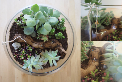 hrrrthrrr:  The other day I made a giant terrarium for my dining room table. The scene is complete with a man trying to climb out, a dude running to help (I'm assuming) and then a couple that's probably going to make out soon.   future crafts 101, terrariums have always been on my list