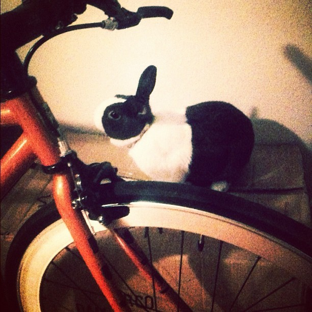 bunny box bike (Taken with Instagram at BOMBERLAND!)