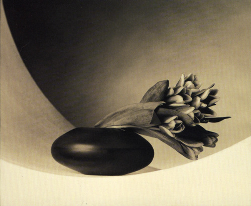 maliciousglamour:  Tulips, 1987Photographer: Robert Mapplethorpe