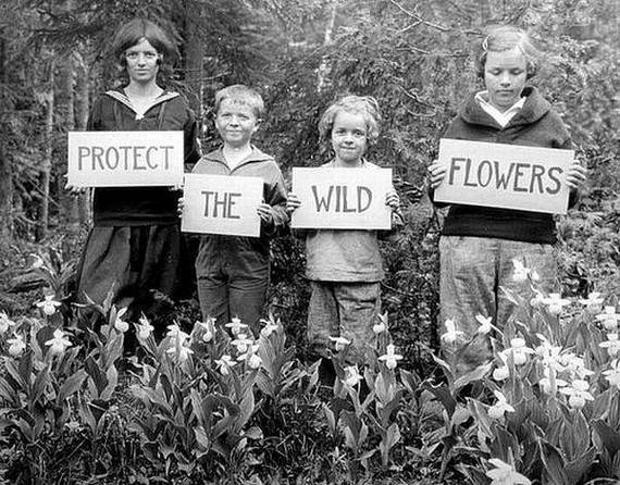 anneyhall:  Protect the Wild Flowers