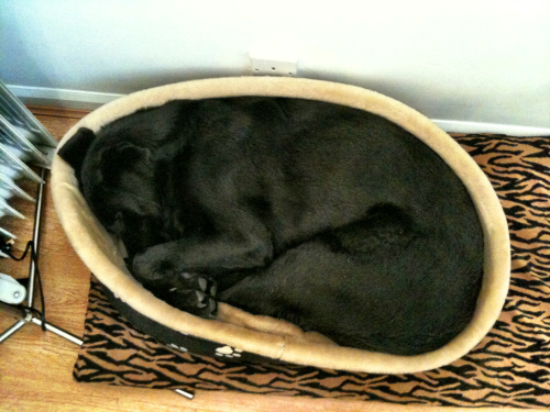 I'm pretty sure Jake would manage to fit himself into any size/shape bed imaginable.