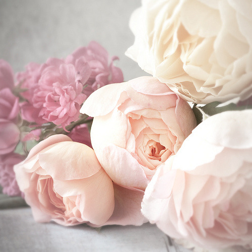 iloveprettypinkthings:  My obsession with peonies grows more every day, especially when I find images of so many various shades of pink and white!  Perhaps my boyfriend should be looking at this blog more often to get the hint!