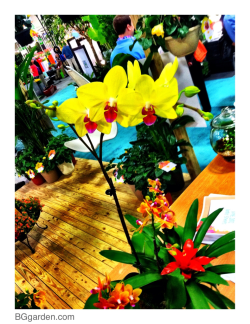 #gardenchat at #tpie12 … We've arrived and ready to share new tropicals plus from the sunshine state !