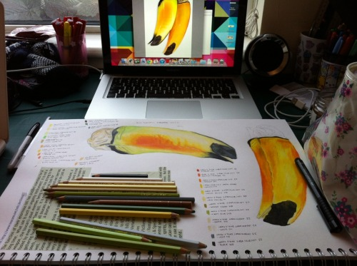 Beginning stages of my six week research project about toucans.
