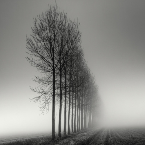 ruineshumaines:  Aligned (by Pierre Pellegrini)