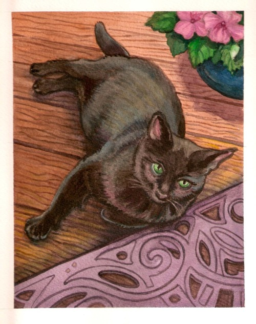 more cats…my little nemo boy, by me, hoddleypoddley