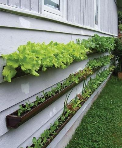Vertical vegetable garden planted on the side of your house in repurposed rain gutters  via How does your garden grow? A different way to plant vegetables  Submitted by Anna C. via urbangreens: