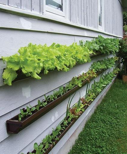 Vertical vegetable garden planted on the side of your house in repurposed rain gutters via How does your garden grow? A different way to plant vegetables Submitted by Anna C.