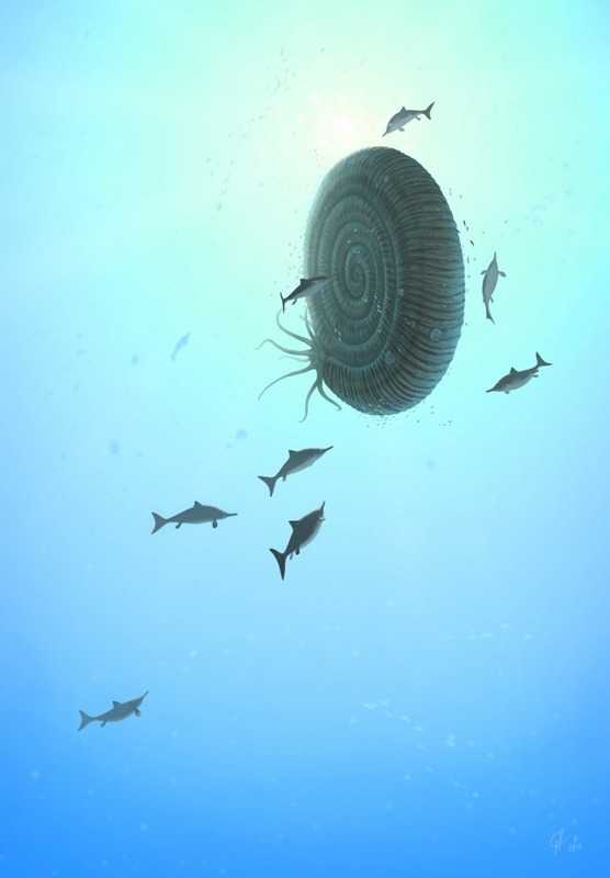 pattopet:  Epivirgatites Epivirgatites with young ichthyosaurs. One more illustration for the book about Mesozoic seas of Volga region, Russia. Olorotitan art