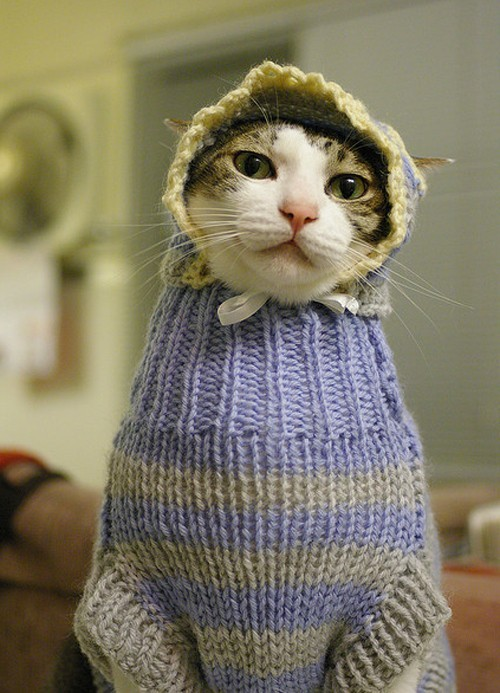 talesofknitty:  Knitted Kitty. This cat looks ready to rock and roll!