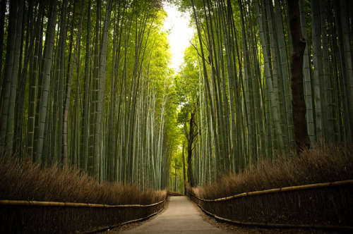 dreyaeva:  the path of bamboo, revisited #16 (near Tenryuu-ji temple, Kyoto) (by Marser)