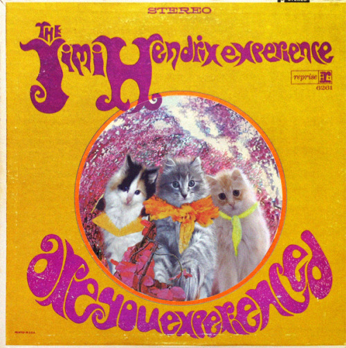 The Kitti Hendrix Catsperience