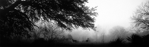 Deer in the Fog (by hightoneguy)