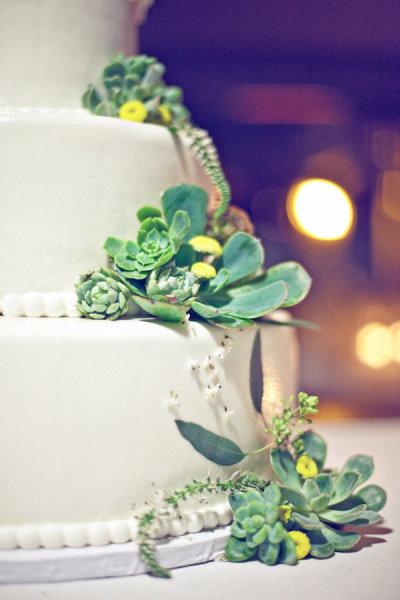 Décoration mariage : les succulentes
