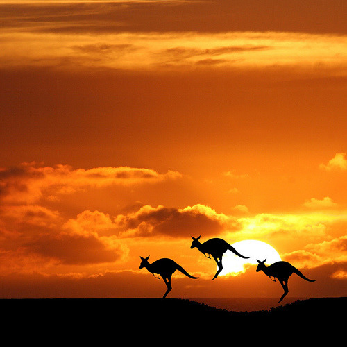 black-wolves:  Australia 2009 (by Heaven`s Gate (John))