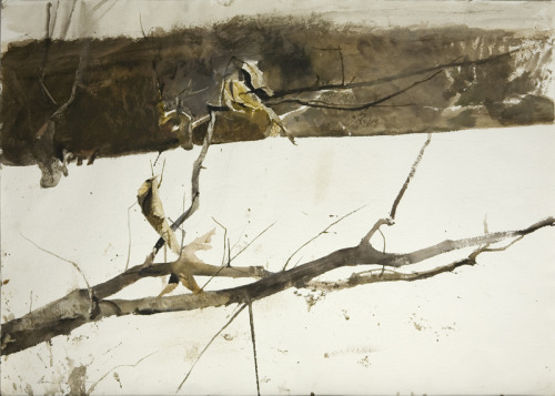 Branch in the Snow    Andrew Wyeth