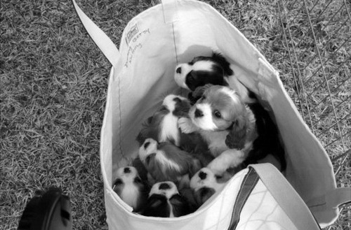 Puppies in a bag. Ugh, too much cute.