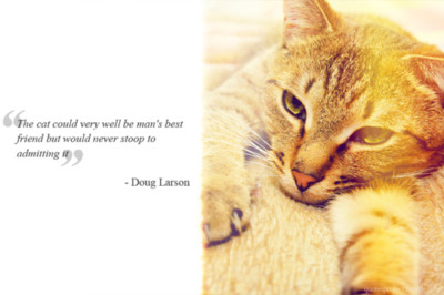 """The cat could very well be man's best friend but would never stoop to admitting it"" - Doug Larson"