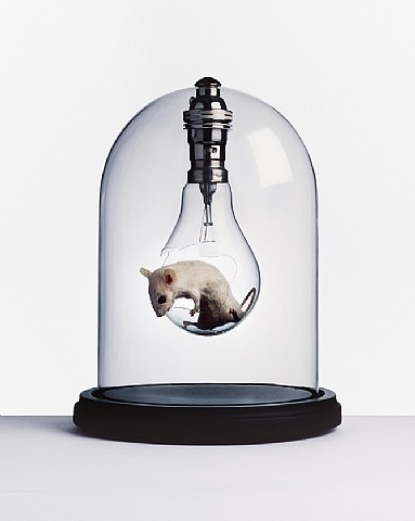 Nancy Fouts, Mouse Bulbs Series, Dave, 2011 Taxidermy mouse, mixed media, presented in a glass dome h: 22 x w: 17 cm / h: 8.7 x w: 6.7 in